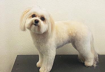 Ashland Dog Grooming